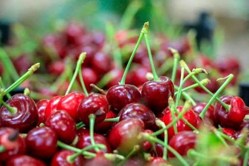 سالانه 65 هزار تن محصولات باغی در شهرستان سامان تولید میشود