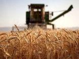 خسارت 70 درصدی خشکسالی به محصولات دیم استان ایلام
