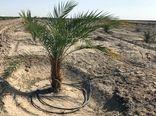 ۳۲۰ میلیارد ریال اعتبار برای اجرای آبیاری نوین در بوشهر اختصاص یافت