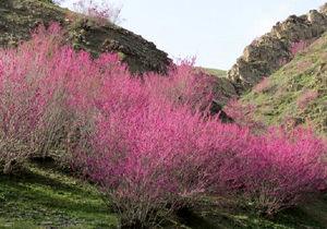 دره ارغوان؛ بهشت رنگها در خراسان شمالی