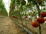تولید سالانه 46 هزارتن انواع محصولات گلخانهای درسیستان وبلوچستان