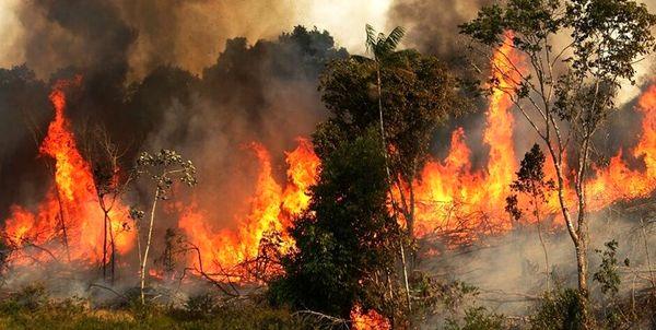 ۶۰ هکتار از مراتع و جنگلهای چهارمحال و بختیاری دچار حریق شد