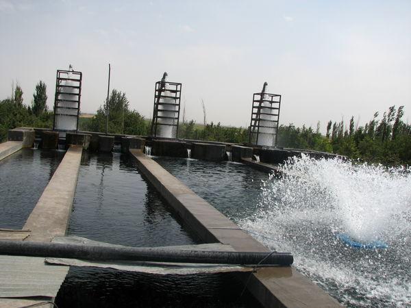 3 هزار و 998 تن انواع ماهیان در استان قزوین تولید شد