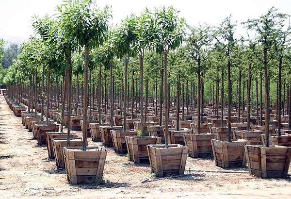 توزیع 200 هزار نهال یارانهای در بخش کشاورزی هرمزگان