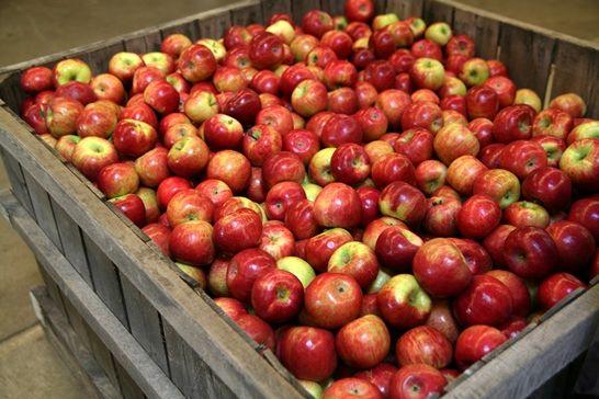 میوه صدرنشین صادرات محصولات کشاورزی شد
