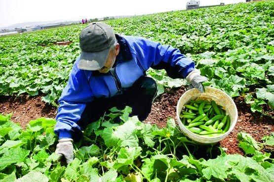 پرداخت 839 میلیارد ریال تسهیلات به زیربخشهای کشاورزی ایلام