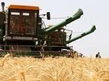کاهش وسعت زیر کشت گندم در اصفهان