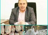 ذخیرهسازی 174 تن گوشت مرغ از ابتدای سال 99