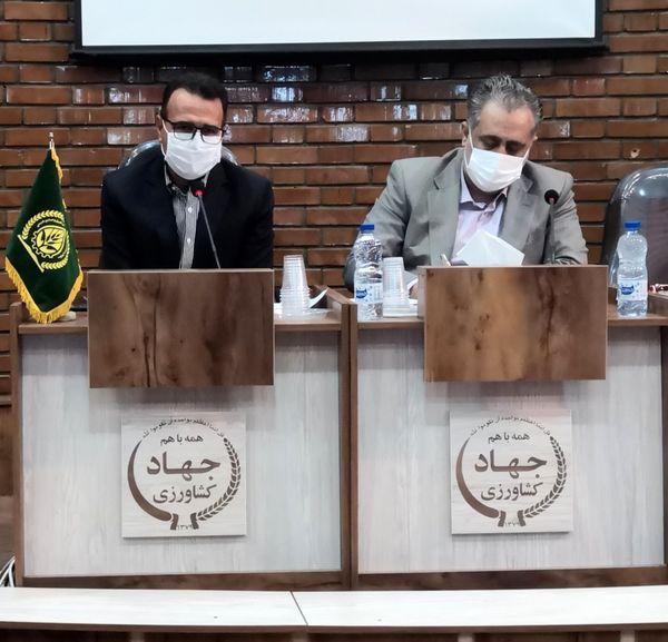 22 هزار هکتار مزارع شتوی شیراز در حال برداشت است