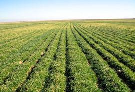 مبارزه با علفهای هرز در یک هزار و12 هکتار از مزارع کشاورزی شهرستان تاکستان