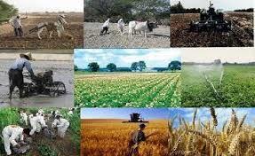 اجرایی شدن ۳۸۰۰ طرح اشتغال در بخش کشاورزی خراسان جنوبی