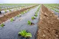 مدیریت کاهش تولید پسماندهای کشاورزی در راستای تحقق توسعه پایدار