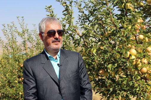 برداشت 65 هزار تن انواع میوه در شهرستان ویژه مرند