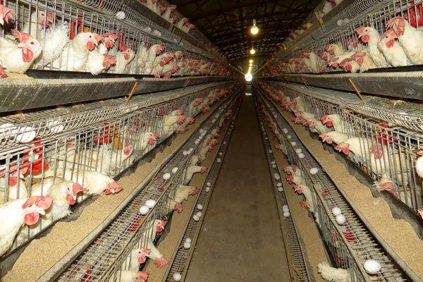پرداخت 52 میلیارد ریال تسهیلات بهین یاب به واحد های تولیدی بخش کشاورزی شهرستان بوئین زهرا