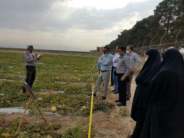 """بررسی """"طرح تولید بذر هیبرید طالبی"""" در پاکدشت"""