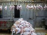 مرغ دو نرخی در بازار معنایی ندارد