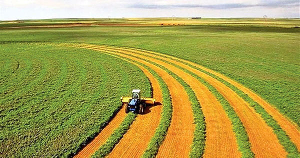 65 درصد اقتصاد کشور وابسته به حوزه کشاورزی است