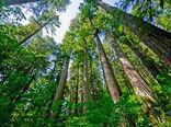زراعت چوب در 1360 هکتار از اراضی ملی چهارمحال و بختیاری