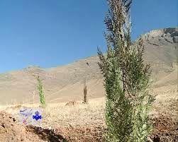 غرس ۹۰ هزار اصله درخت در عرصه منابع طبیعی استان