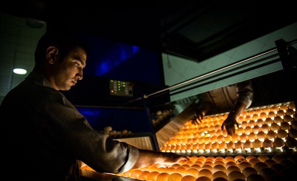 مزرعه تولید تخممرغ