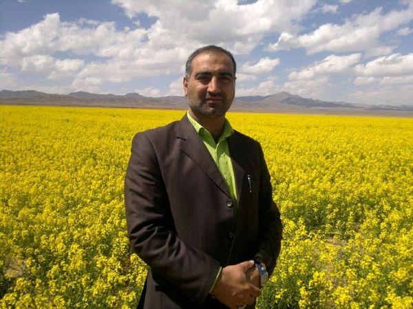 پرداخت یارانه برای تهیه نهال گل محمدی در شهرستان خوسف