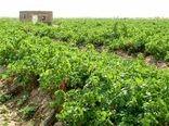 تبدیل هزار و ۲۰۵ هکتار اراضی شیبدار خراسان شمالی به باغ
