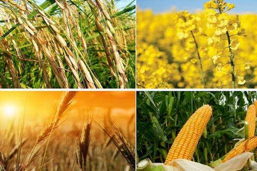 تصویب طرح دوفوریتی تعیین قیمت خرید تضمینی محصولات اساسی کشاورزی