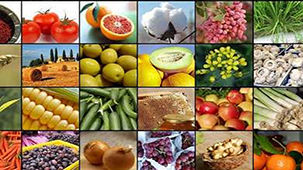 پیشرفت سریع استان بوشهر در افزایش تولید محصولات کشاورزی و دامی