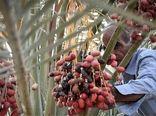 برگزاری کلاس آموزشی تغذیه باغات خرما در شهرستان فهرج