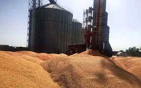 ۵۰۵ هزار تن گندم از گندم کاران کردستانی خریداری شد