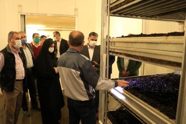 5 محصول کشاورزی استان قزوین کد شناسایی سلامت دریافت کردند