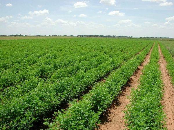 بخش کشاورزی بوشهر با تجربه رشد ۷ درصدی آماده جهش تولید است