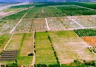 1678 هکتار از اراضی کشاورزی در استان سمنان رفع تداخل شد