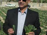 با طرح کاهش مصرف آب، مقام دوم کشت چغندر قند به فارس رسید