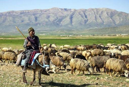 اختصاص ۲۵ میلیارد تومان به طرح های عشایری آذربایجان شرقی