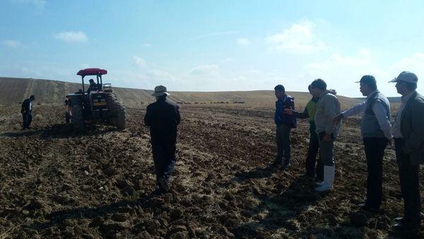 10 هکتار از اراضی کشاورزی چاه  برف به زیر کشت  غلات  و حبوبات رفت