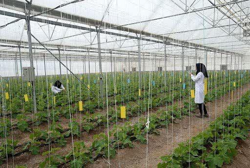 لزوم توسعه کشت گلخانهای در چهارمحال و بختیاری