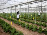 استان مازندران برای تولید گل و گیاهان زینتی و کیوی مزیت دارد