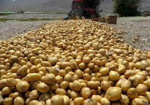 کاشت آزمایشی سیبزمینی در منطقه سرکویر دامغان اجرا شد