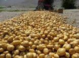 عوارض صادراتی برای سیب زمینی تعیین شود