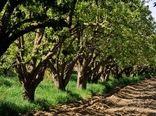 اصلاح و نوسازی ۲۹۳۰ هکتار از باغات استان طی ۹ ماهه امسال