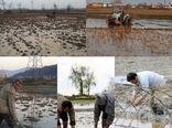 با توجه به تقویم زراعی کشت و کار برنج، کشاورزان به توصیههای ایمنی محیط کار توجه کنند