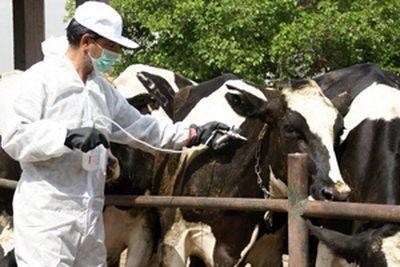 آغاز واکسیناسیون علیه بیماری ویروسی لمپیاسکین در دامداریهای استان