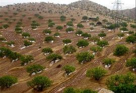 اراضی شیبدار برای احداث باغ واگذار می شود