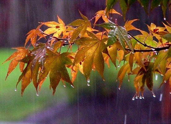 کاهش 31 درصدی میانگین بارندگیها