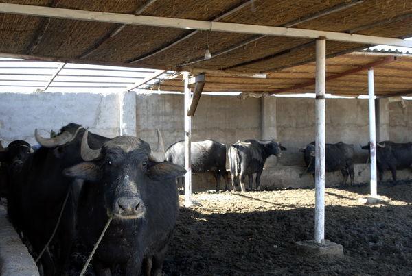 اجرای پروژه استحصال منابع علوفهای در خوزستان