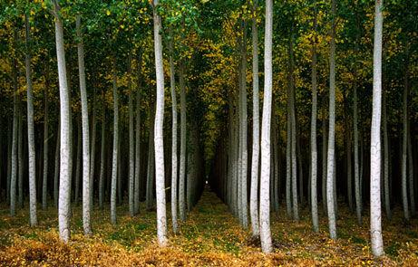 ۱ میلیون هکتار جنگلکاری در کشور طی ۸ سال اخیر ایجاد شد