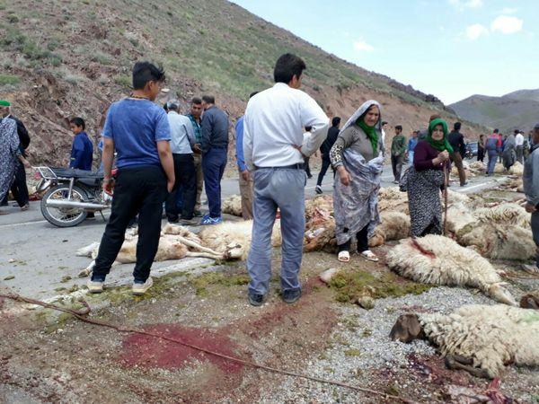 کشته شدن 89 گوسفند در تصادف کامیون