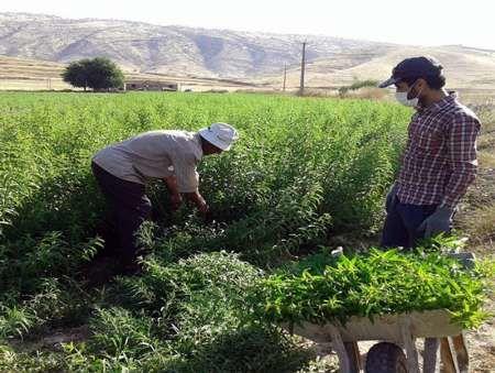 230 هکتار از مراتع کردستان غنی سازی شد