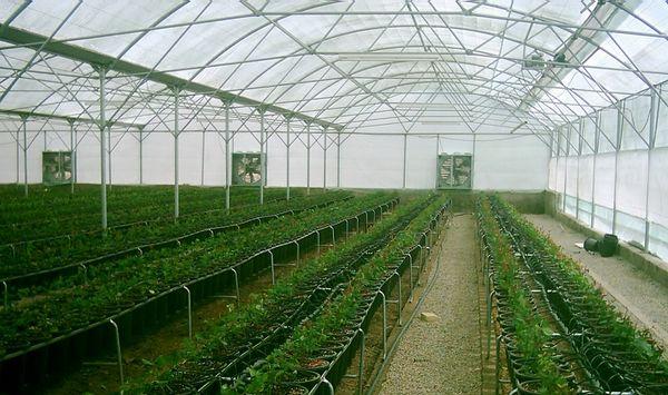 تأمین زیرساختهای لازم در واحدهای گلخانهای